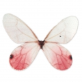 Butterfly without hole 50x35 mm White/Red x1