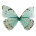 Butterfly without hole 50x35 mm Blue/Green x1