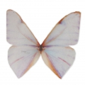 Butterfly without hole 50x40 mm White/Orange x1