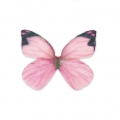 Butterfly without hole 30x22 mm Pink/Fuchsia x1