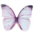 Butterfly without hole 50x35 mm Blue/Violet x1