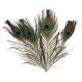 Peacock feather 25-30 cm x4